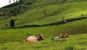 Homem é flagrado furtando gado, ataca policiais e acaba morto