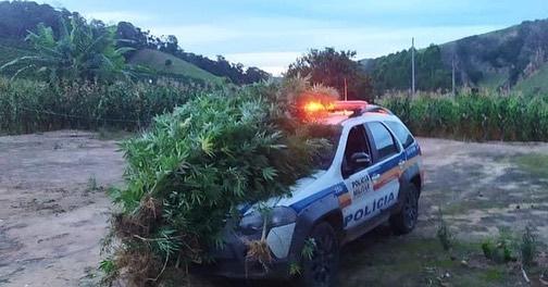 Polícia encontra plantação de maconha no Distritos de Inhapim