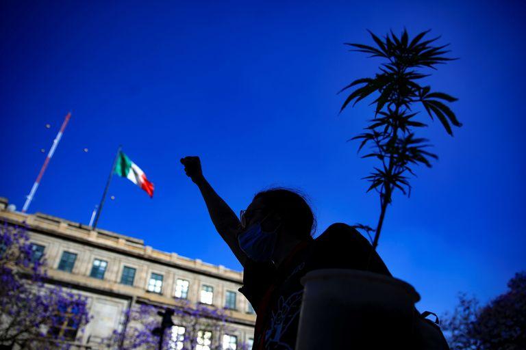 Câmara dos Deputados do México aprova a legalização da maconha