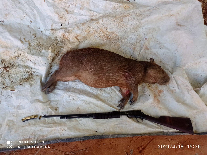 Polícia de Meio Ambiente prende caçador com espingarda e capivara