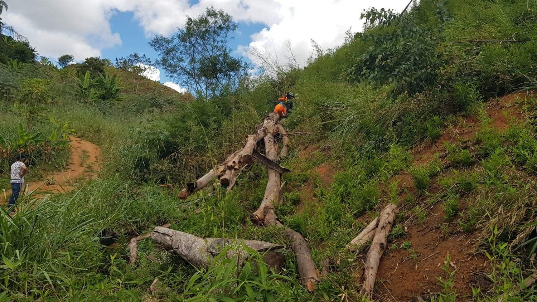 Home morre ao ser atingido por eucalipto em Vila De Fátima