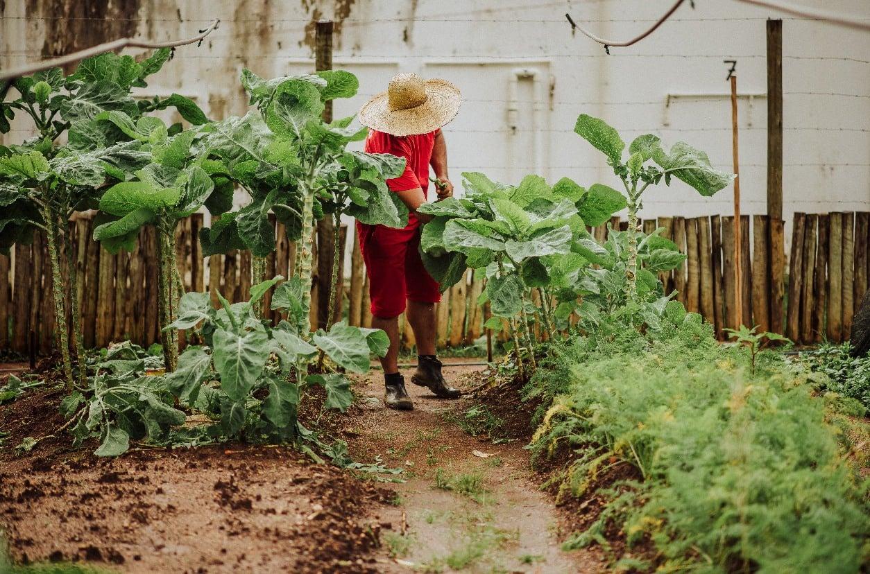Do presídio para a mesa: horta em Caratinga produz 1 tonelada de alimentos por mês