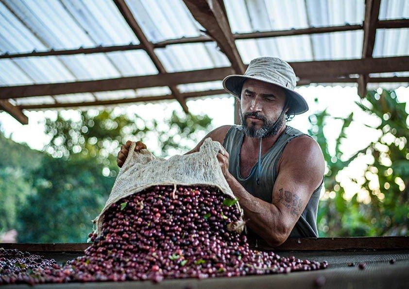 Maior produtor de café, Brasil possui 12 indicações geográficas