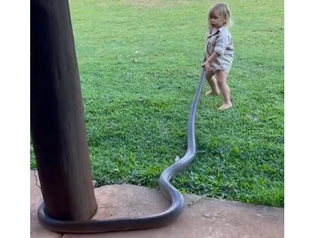 Bebê de dois anos puxa cobra para fora do quintal na Austrália